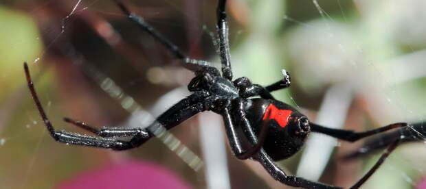 «Черные пауки» Польши теряют интерес к Белоруссии