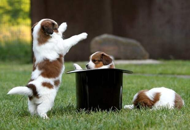 These Funny Animals (47 pics) - Izismile.com