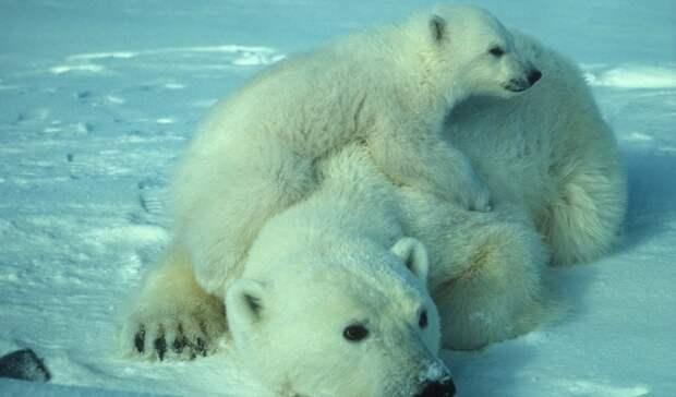Начался второй этап полярной научной экспедиции «Хозяин Арктики»