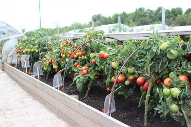 Грядка-короб для томатов: как сделать и какие сорта помидоров посадить
