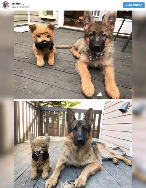 Собака подросла