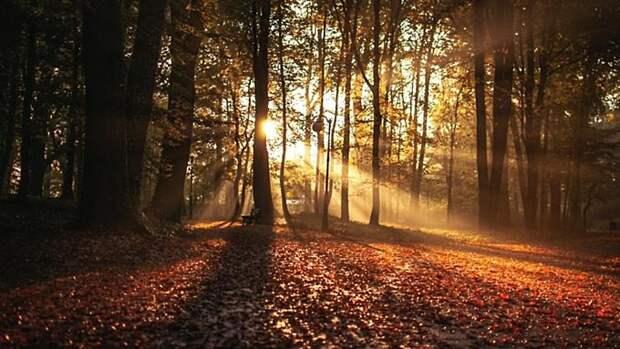 Днём до +11, утром местами туман. О погоде в Алтайском крае 17 октября