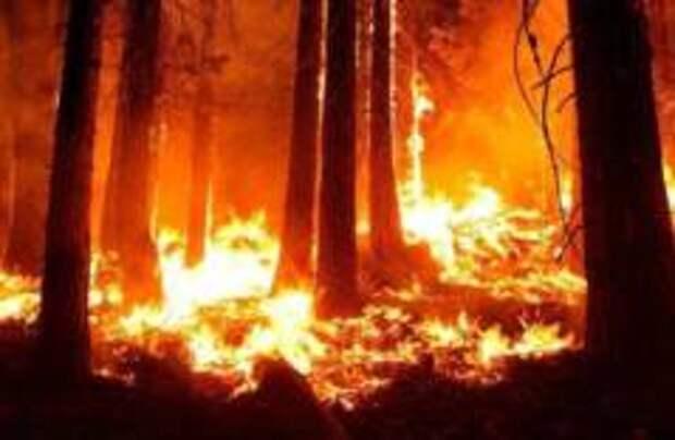 Лес Винни-Пуха загорелся в Британии