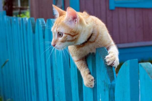 Пьяному ничего не страшно, даже если ты простой дачный кот