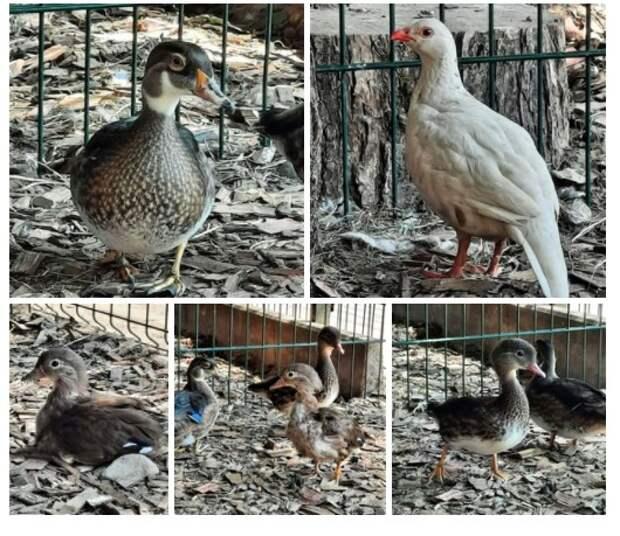 В птичьем уголке сквера по Олонецкому проезду появились новые обитатели