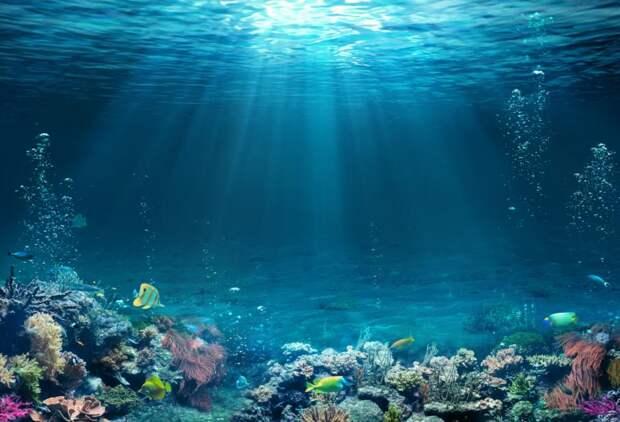 ВИндонезии удалось восстановить огромный коралловый риф