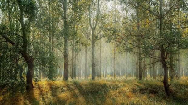 В экоцентре «Московский эколог» в Войковском  пройдет лекция для детей о чудесах леса