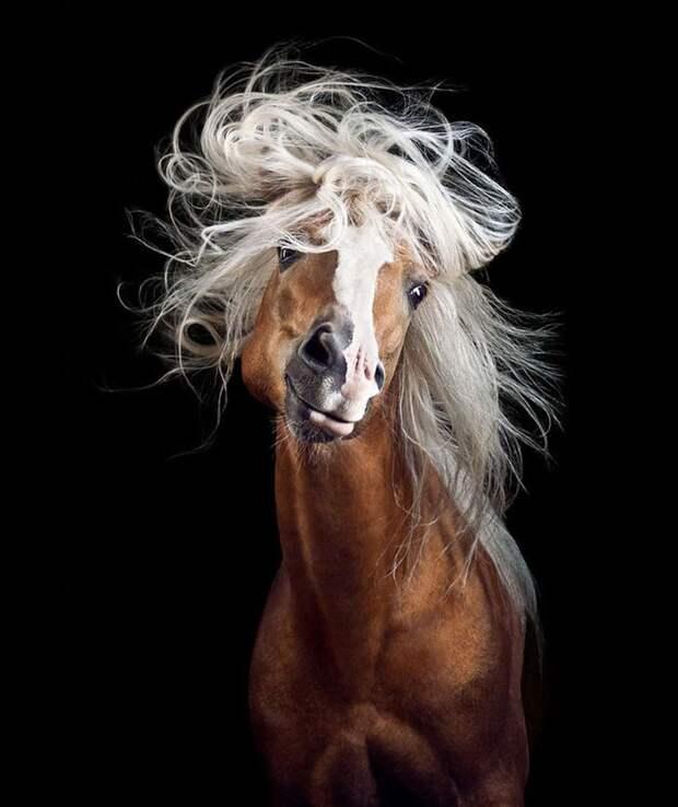 Моцарт животные, искусство, лошади, фотография