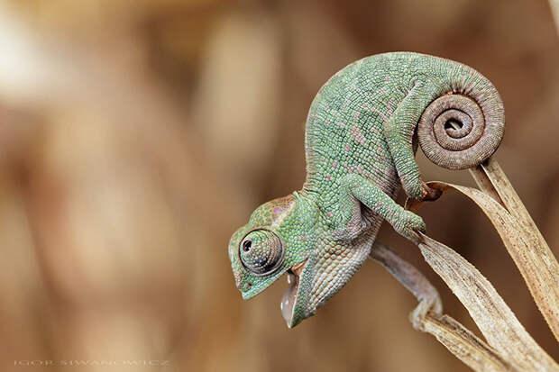 cute-baby-chameleons-582b7d0dbe073__700