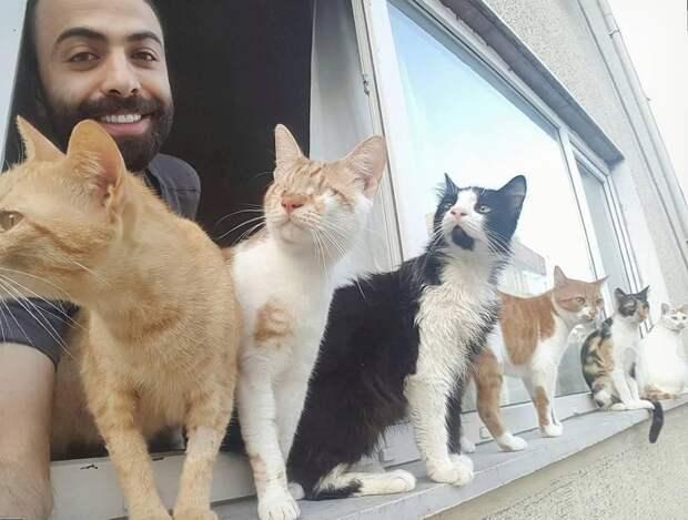 Котики тянутся к хорошим людям! в мире, видео, животные, кот, коты, пианист, реакция, турция