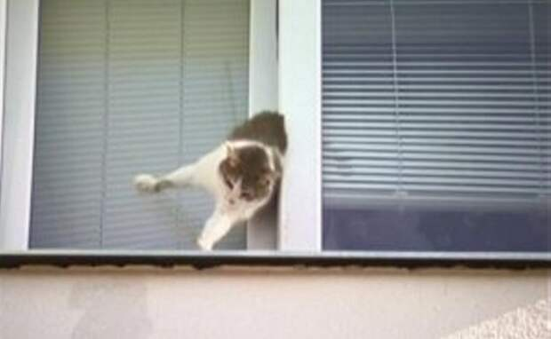 История героического спасения застрявшего в окне котика