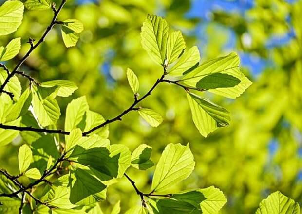 Дерево/ Фото pixabay.com