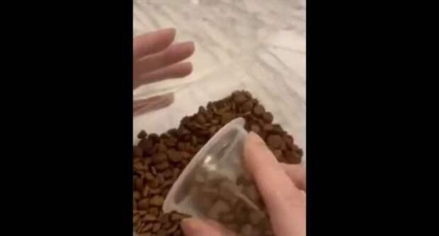 Кормление собаки может стать опасным (1 фото + 1 видео)