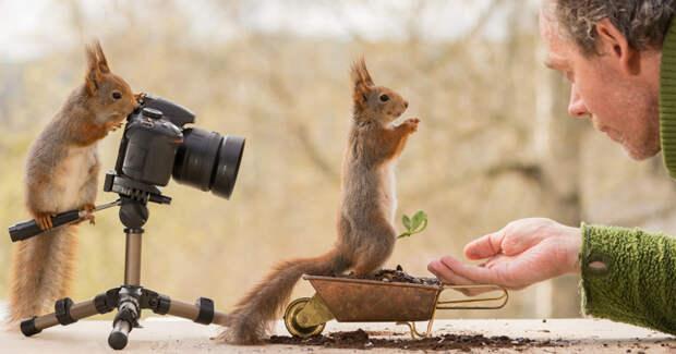 Как белки фотографа снимали