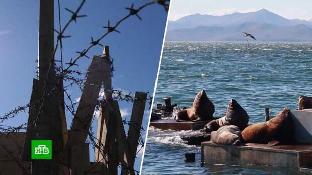 Лежбища морских львов на Камчатке спрятали от туристов за колючей проволокой