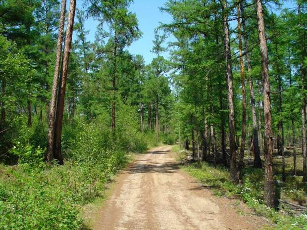 В Забайкалье 16 мая ожидается до 21 градуса тепла