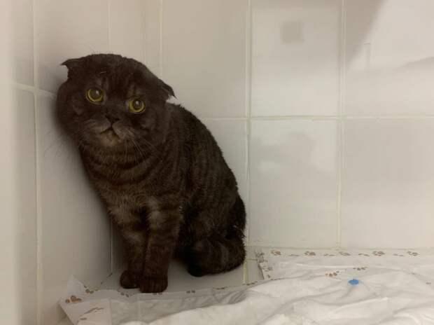 Истощённого кота по кличке Рэмбо спасли на Планерной