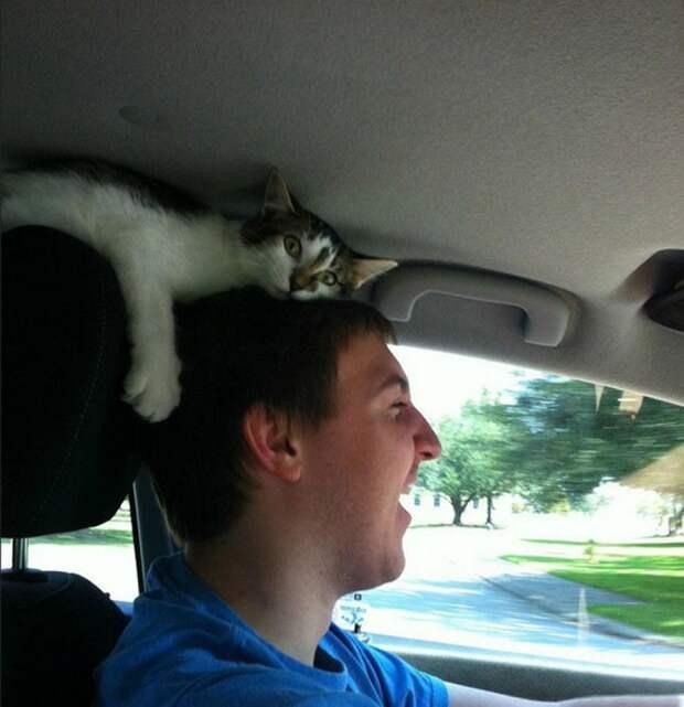 Кто так водит! весело, коты, повадки, смешно, эмоции