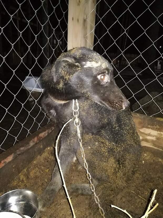 """""""Собаку просто оставили умирать"""" - животное месяц прожило в колодце"""