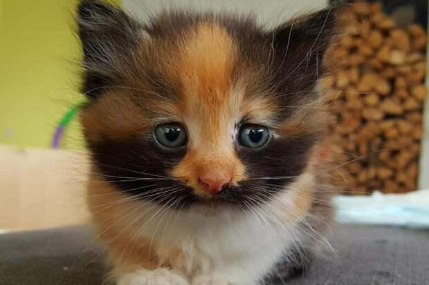 Трёхцветный котёнок каким-то образом забрался в салон моего автомобиля, и мне пришлось решать, что с ним делать.