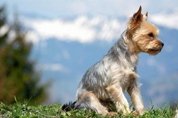 Житель Красноярского края спас тонувшую в Енисее собаку