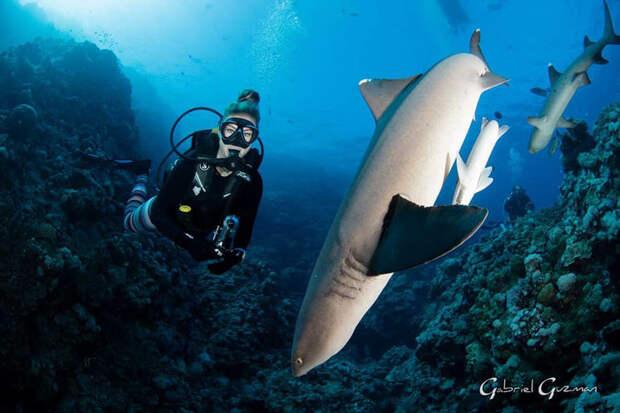 Девушка-дайвер делает потрясающие снимки с удивительными морскими обитателями
