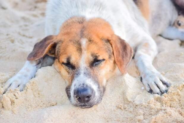 _отравление_австралия-1024x683 22 погибли, 44 госпитализированы — массовое отравление собак в Австралии