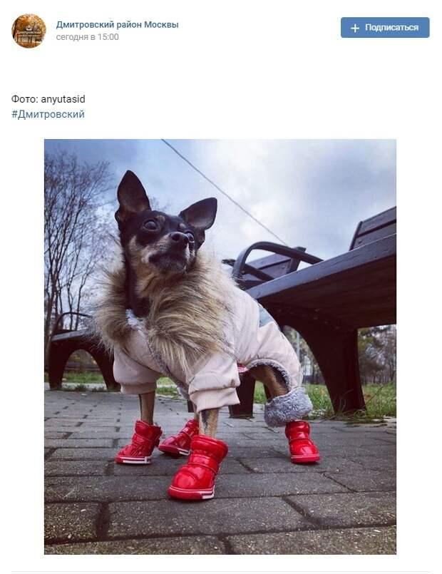 Фото дня: пес подготовился к прогулке в парке «Ангарские пруды»