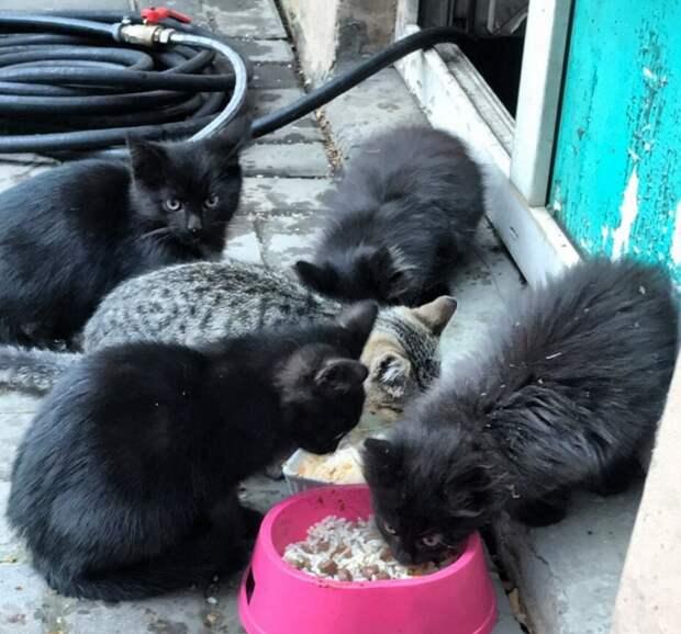 Они родились и выживают там, где каждый день для них может стать последним...