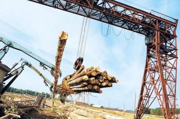 С 1 июля пошлина на экспорт отдельных видов древесины составит 10%