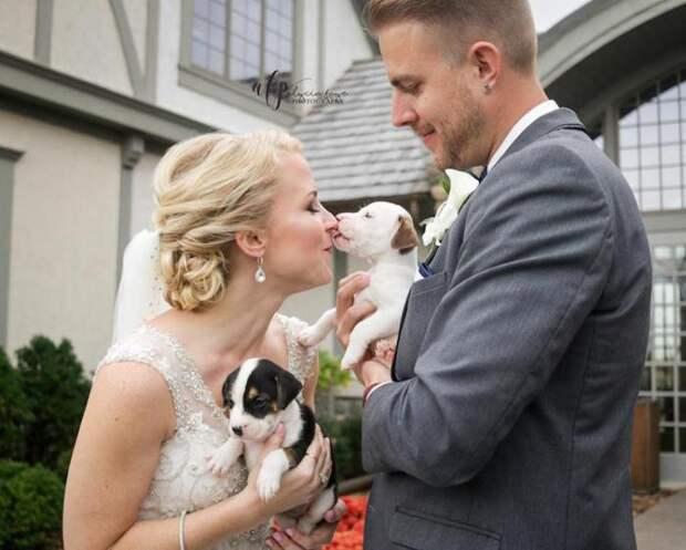 Щенки вместо букетов: оригинальная свадьба волонтеров, которые помогают бездомным животным