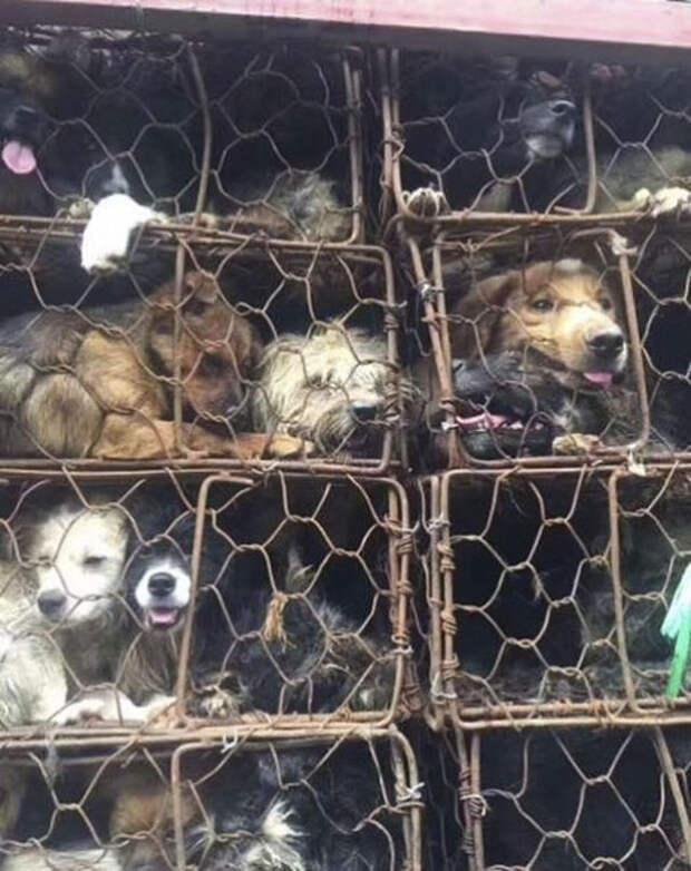 История о том, как парень и его друзья спасли почти 1000 собак от смерти