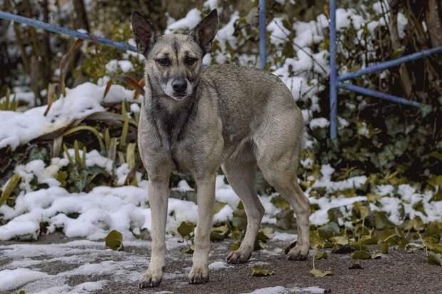 Ветеринары проверили здоровье бродячих собак у воткинской школы №5