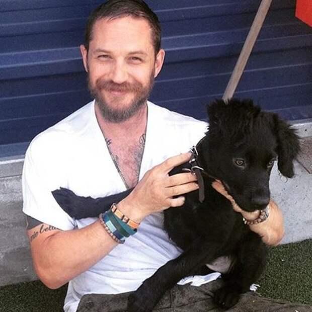Еще один обладатель прекрасных ушек и умного взгляда Том Харди, актер, животные, кино, милота, собака, собаки, фильм