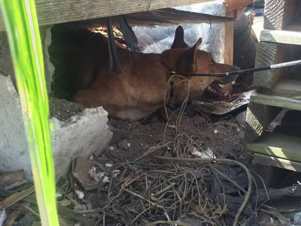 История спасения собаки, пережившей предательство, и ее малышей