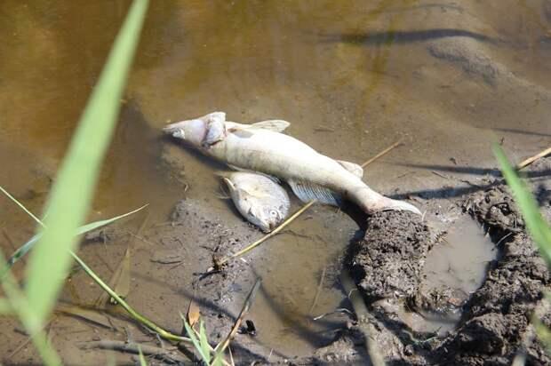 На Кубани по факту замора рыбы завели уголовное дело