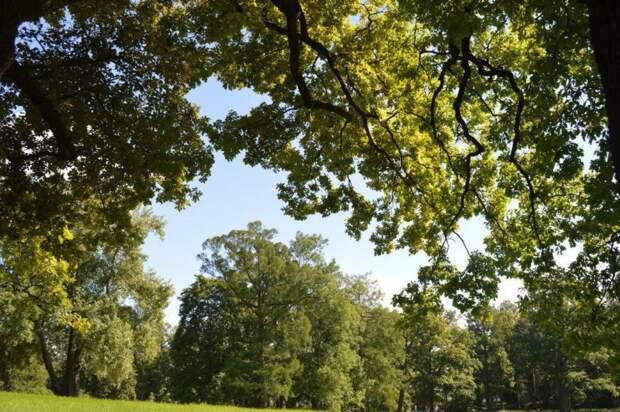 Дерево/ Фото pxhere.com