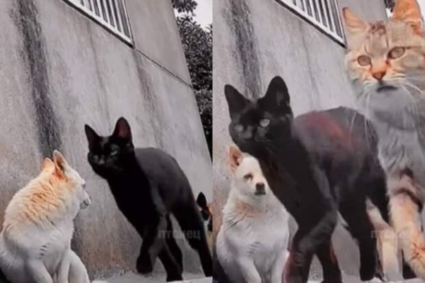 Пес растерялся, встретив банду дерзких котов, и заставил Сеть хохотать