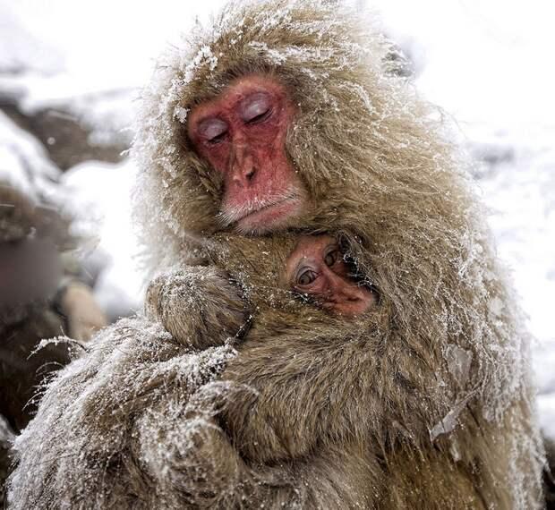 19 фото с эмоциями животных, которые зарядят вас позитивом