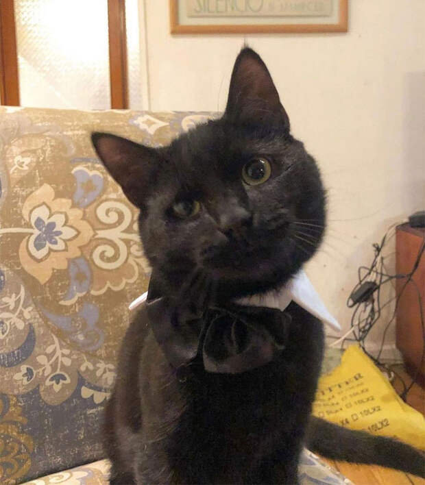 Кот подружился с мышью, и даже заставил хозяина принять её в дом