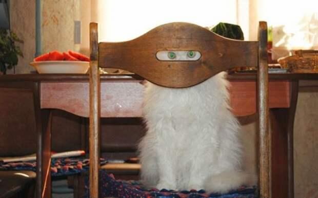 18 доказательств, что коты — многогранные личности котэ, кошки