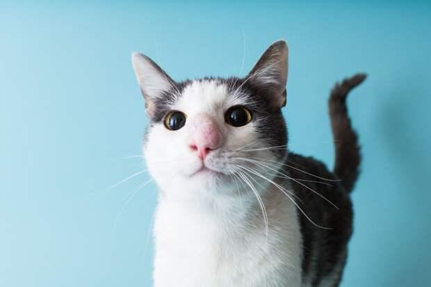 Спасение шароносого кота: нежный пациент Небесные Лапки — ещё тот храбрец!