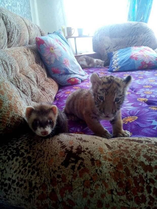 Фото:http:safaripark25