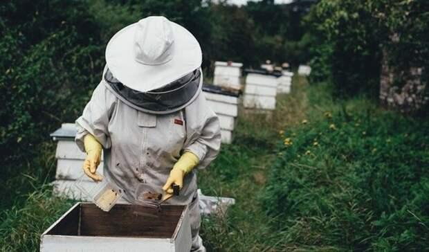 Три важные новости вторника вРостове ораках, пчелах и«сухом законе»