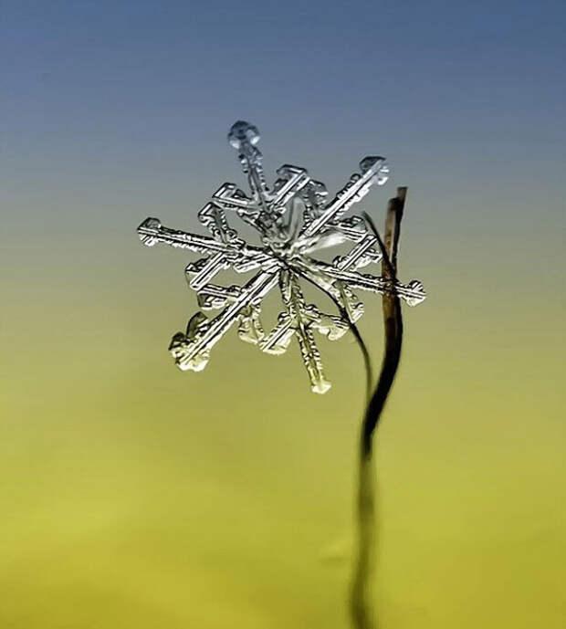 Снежинки в макрообъективе Осокина