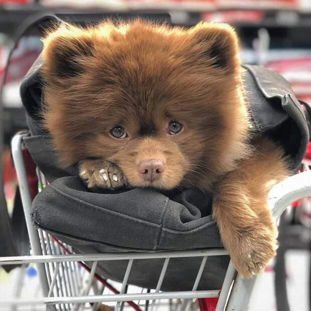 Необычная собака из приюта стала любимцем людей по всему миру