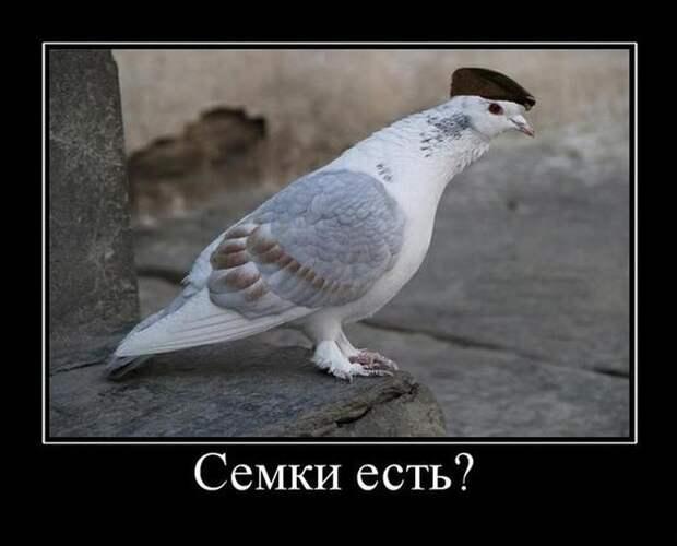 1449554553_23