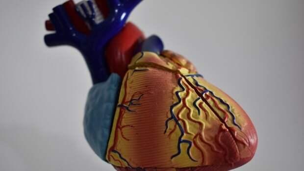 Терапевт перечислила правила безопасности для сердечников в жару