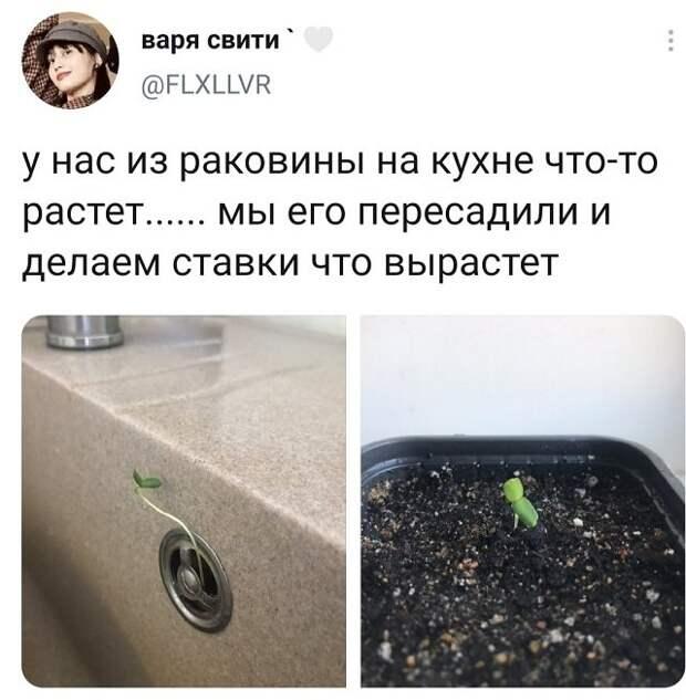 твит про кухню