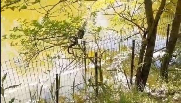 """Ростовчанку, испугавшуюся змей на деревьях, затравили в соцсетях: """"Ещё неизвестно, кто опаснее"""""""